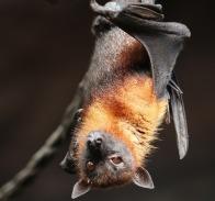 bat-4887509_1280